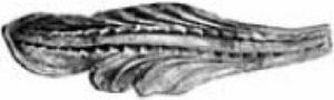 Лист арт. 19-1132
